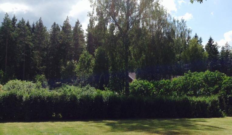 The Next Door Forest